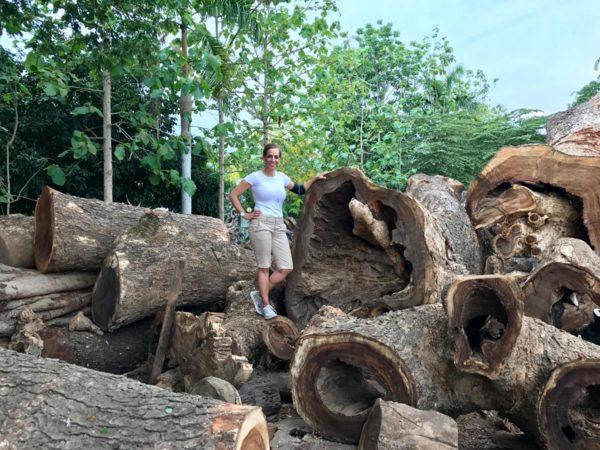 Dorit sourcing wood for sculptures